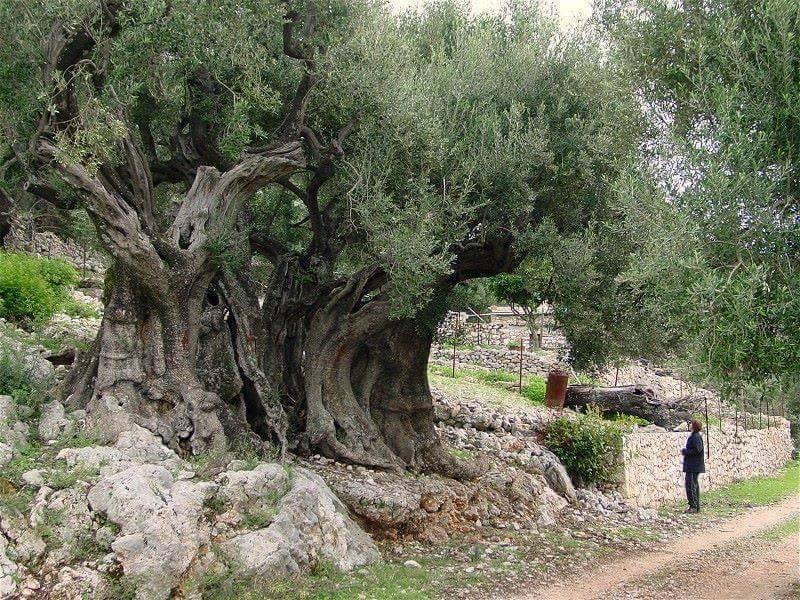السنة الإيمانية للعودة إلى الجذور والتجدد