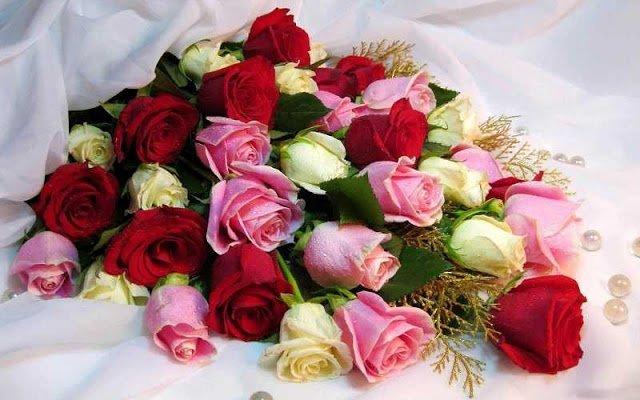 Photo of الورود تملك لغة سحرية في التعبير عن المشاعر