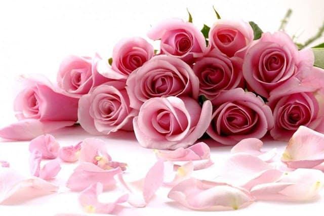 الورود تملك لغة سحرية في التعبير عن المشاعر