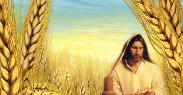 باقة من التأملات المسيحية