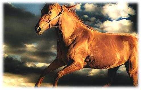 واجه مشاكل الحياة باعتبارها حفنة تراب - قصةالمزارع والحصان