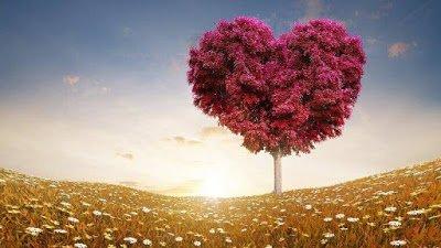 Photo of أين نحن من المحبة! هل فقدنا إنسانيتنا وانتصر علينا الشرّ؟