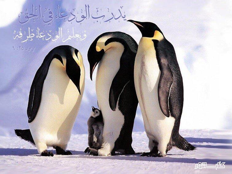 Photo of آيات عن الفخر والإعتزاز 2 Pride – عربي إنجليزي