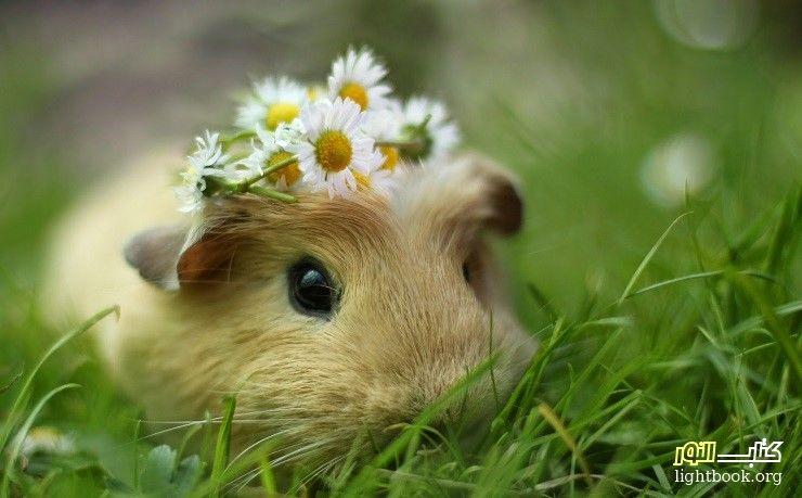 Photo of هل تعلم ما فعله رفيق السوء الثعلب مع الأرنب المسكين؟ قصة