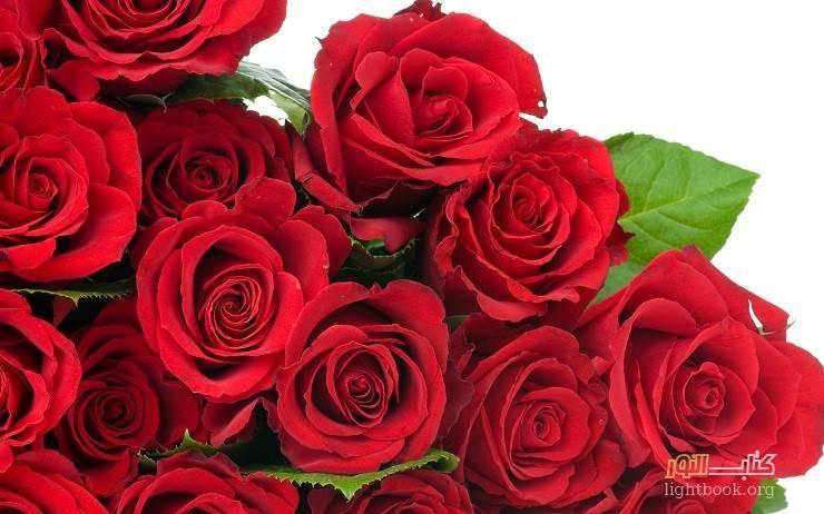 الورود تحمل لغة الجمال والزهور تنشر رائحة الحب - قصة وعبرة